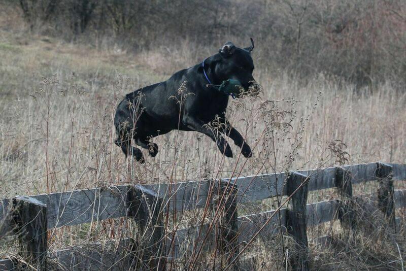 Django jumping