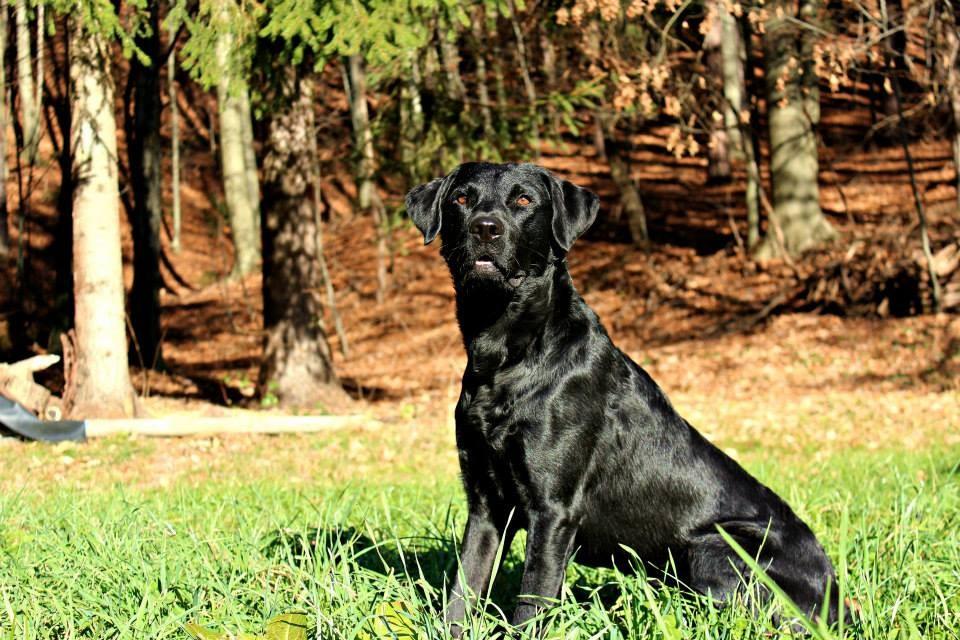 Murphy mit 17 Monaten