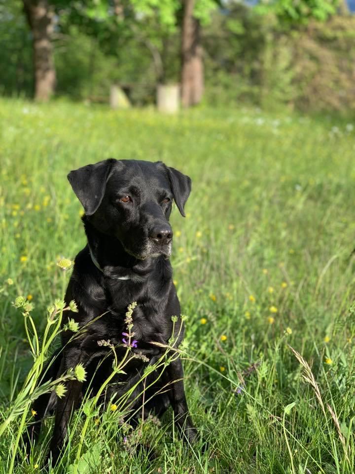 Ivy mit fast 10 Jahren