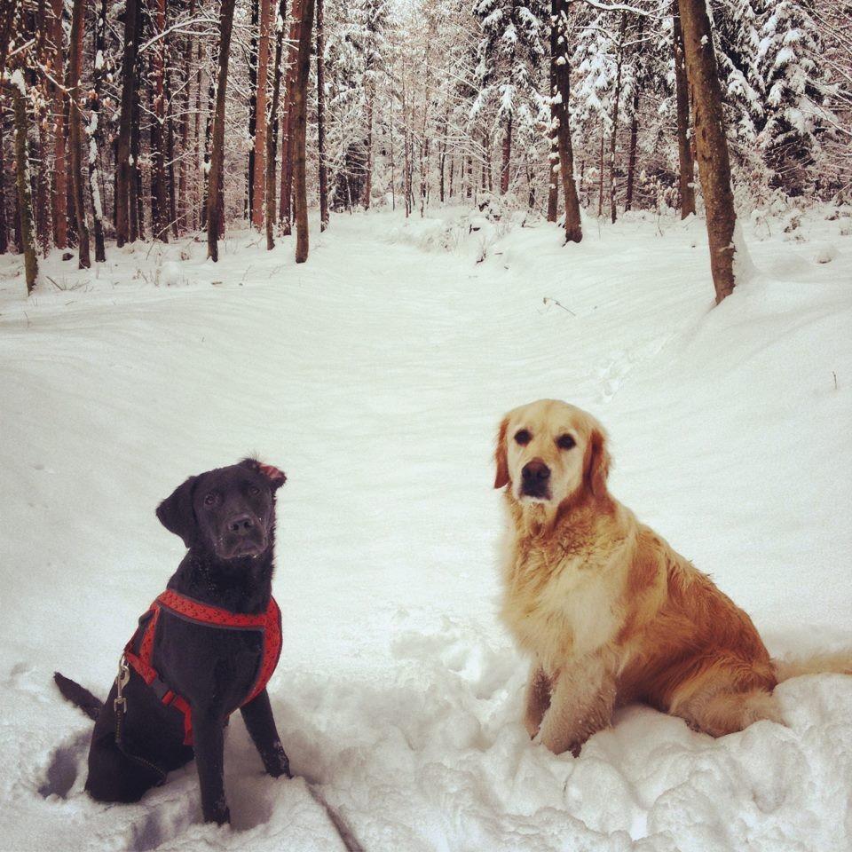 Murphy (6.5 Monate) und Ally im Schnee