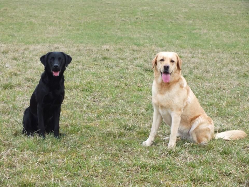 Clover mit 9 Monaten und Bonnie