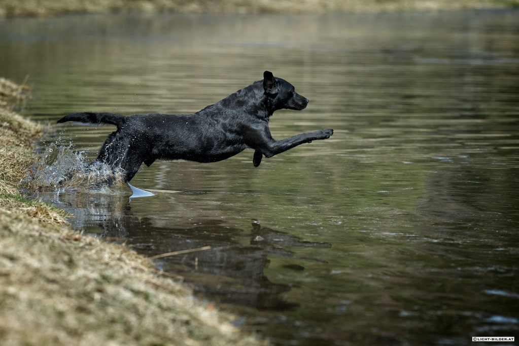 Cash beim Wassertraining (April 2012)