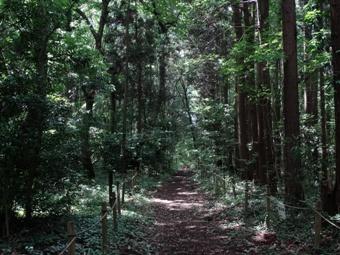 ※ 森の小道