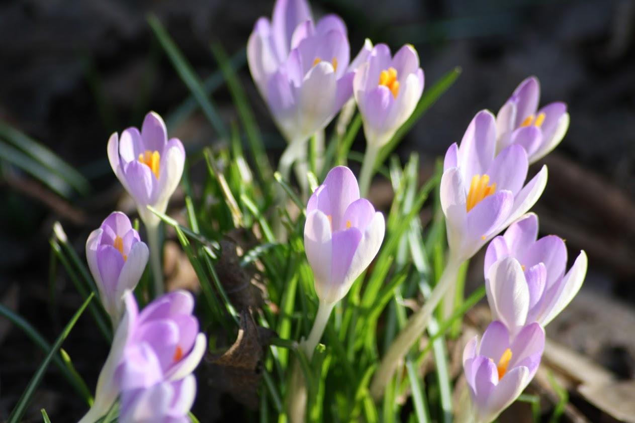 Das Frühjahr entzückt mal wieder mit seinen vollen Farben