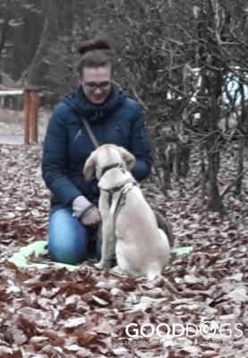 GOOD DOGS Hundeschule - Welpe Erziehung Ruhe-Übung