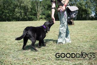 Hundeschule GOOD DOGS - Heusenstamm - Rodgau - Erziehung - Spiel - Sozalisierung