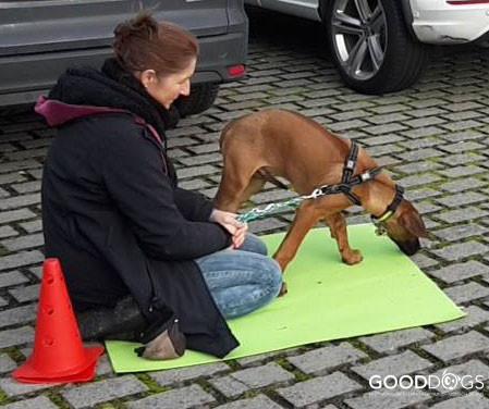 Hundeschule GOOD DOGS - Heusenstamm - Rodgau - Obertshausen - Erziehung  - Welpen - Spiel