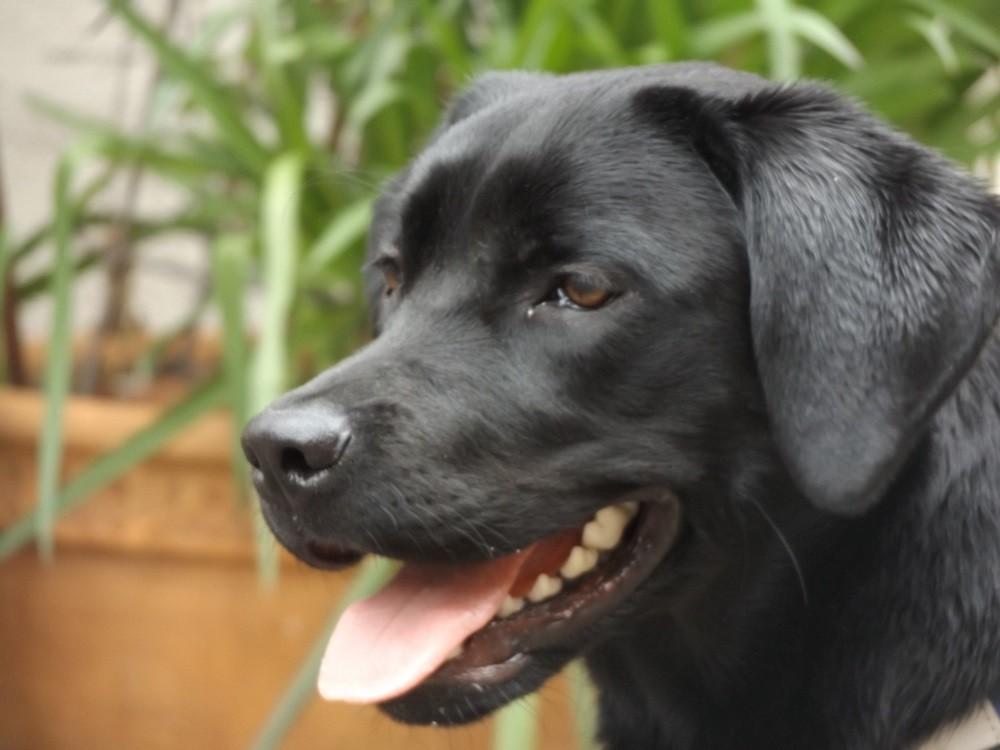 Lucy im Profil