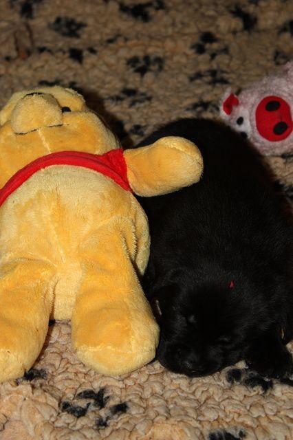 Winnie Pooh & Elrond