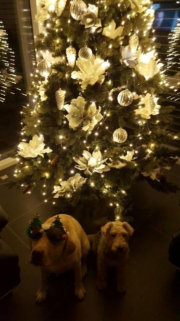 """24.12.2015 - Nala """"Drumnadrochit's Ceithlenn"""" mit Ihrer Schwester - den besten Fang, den Thorsten je vom Angeln mit gebracht hat !"""