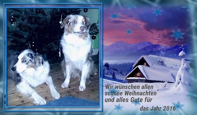 23.12.2015 - Grüsse von Merle & Diva