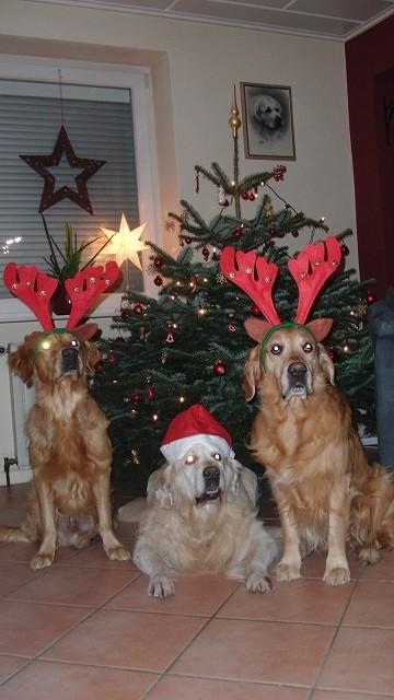 24.12.2015 - Auch diese 3 fand man unter'm Weihnachtsbaum :-)
