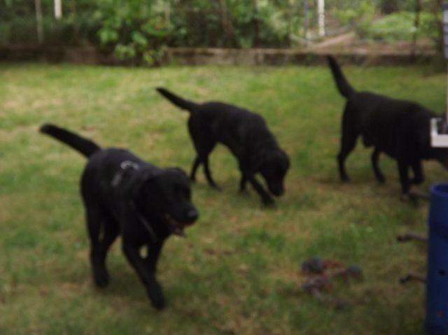 Riley, Elspeth und Albus