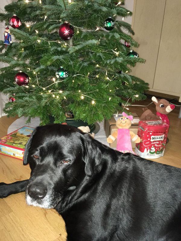"Ben ""Drumnadrochit's Benjamin"" bewacht die Geschenke ...."