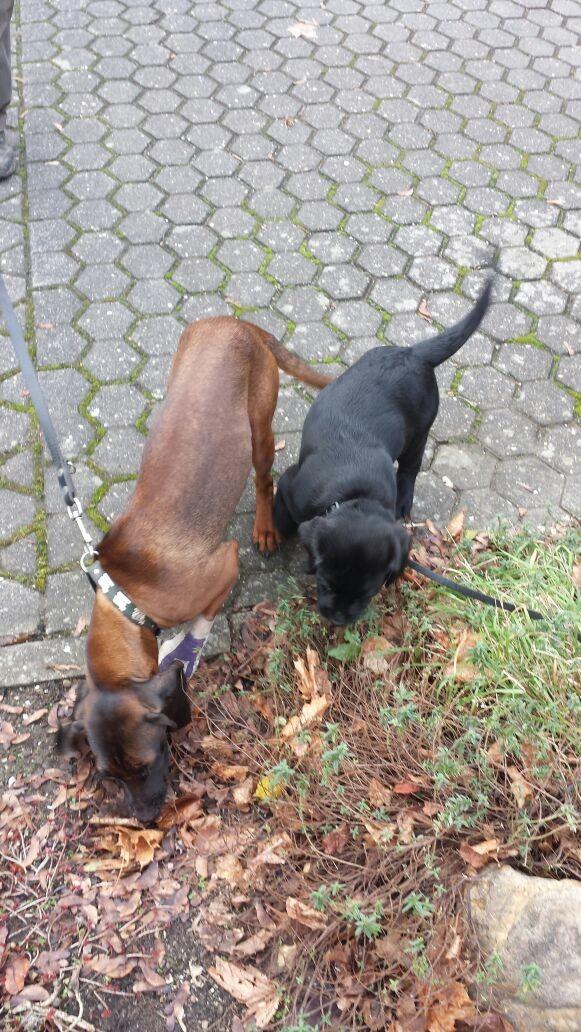 20.12.2014 Freundin & Balou