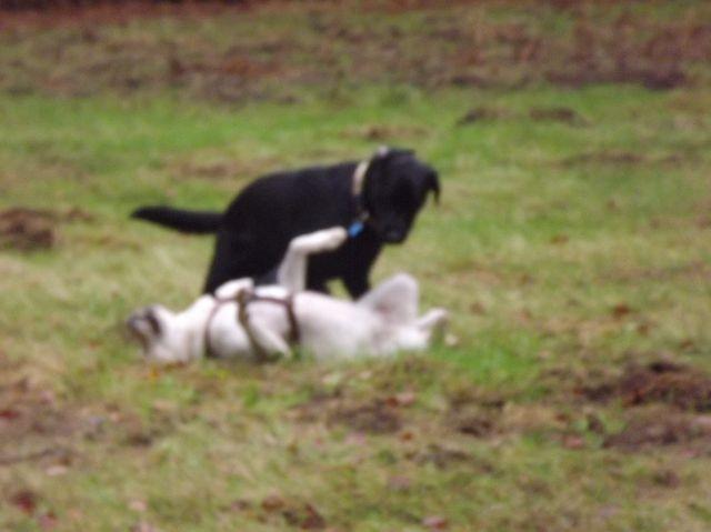 Floyd und Luna .... welchen Witz Floyd wohl erzählt hat?