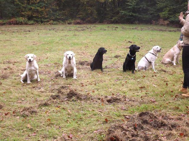 Ella, Nova, Mila, Floyd, Luna, Catweazle