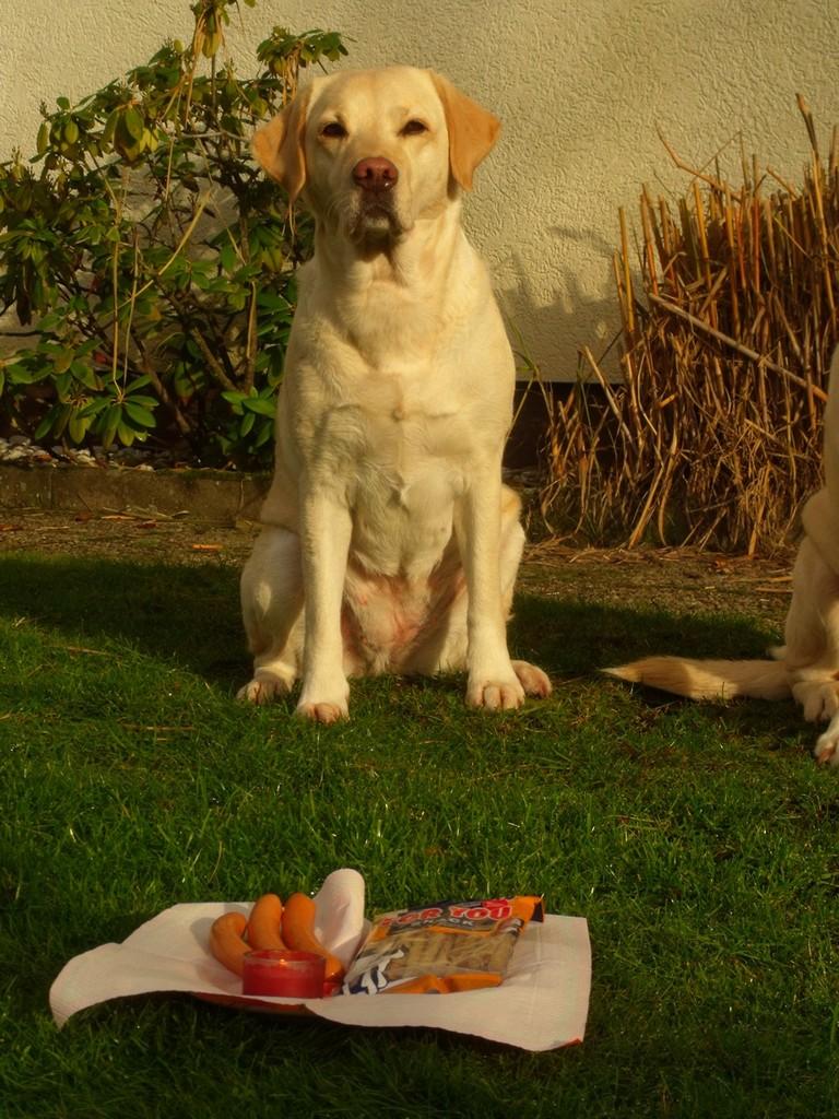 """Drumnadrochit's Arwen """"Ella"""" - an ihrem 6. Geburtstag"""