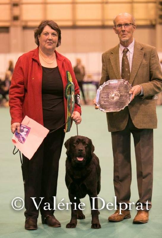 """Der Sieger der Labrador Rüden """"Ramsayville Ruby Walsh"""""""