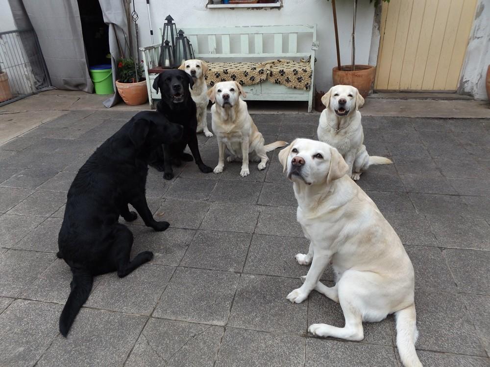 Delraen, Albus, Ella, Marie, Nova und Aili .... wie ähnlich sich Ella und ihre Mama Marie sind ...