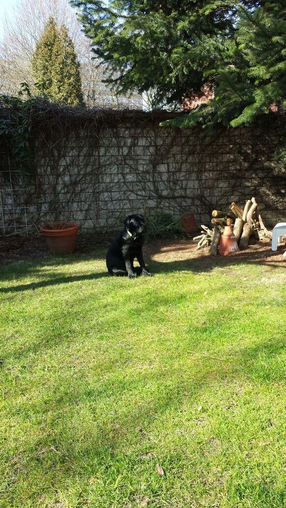 12.03.2015 Balou im Garten