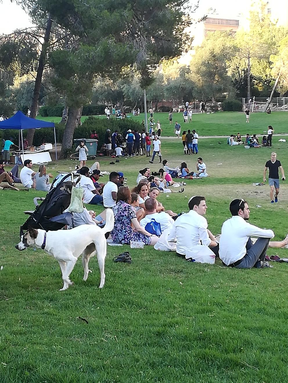 Jerusalem kann auch Multi-Kulti.  Hier im schöen sacher- park am Fuße der Knesset. Juden, Araber, Inder, Afrikaner- alles neben- und teilweise miteinander- Cricket, slackline, Barbecue-