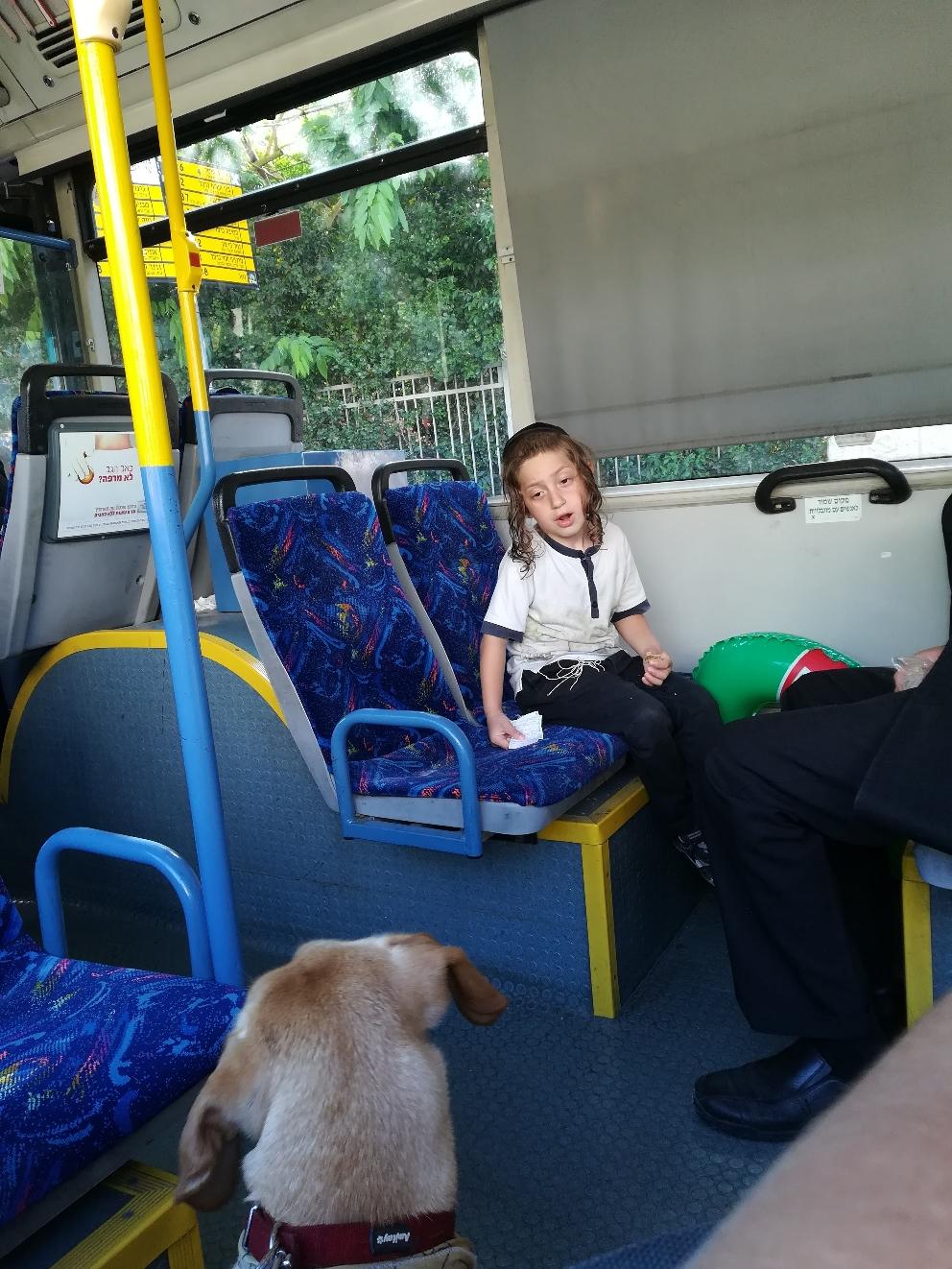 Der Hund im Bus wird liebevoll bestaunt- streicheln erlaubt der Papa nicht