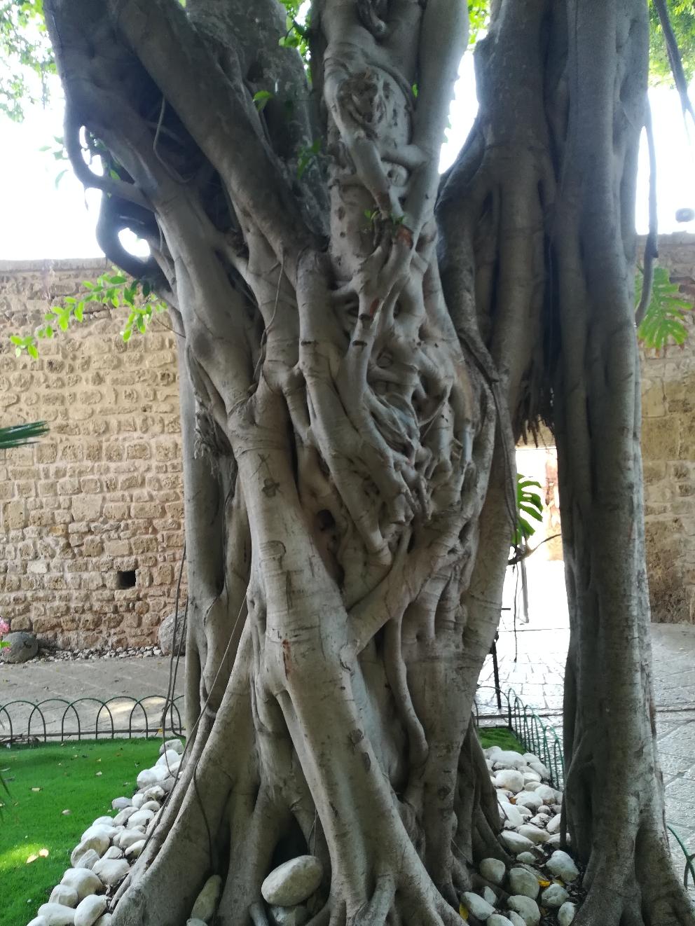 Baumskulpturen im Innenhof eines Gartens in Akko