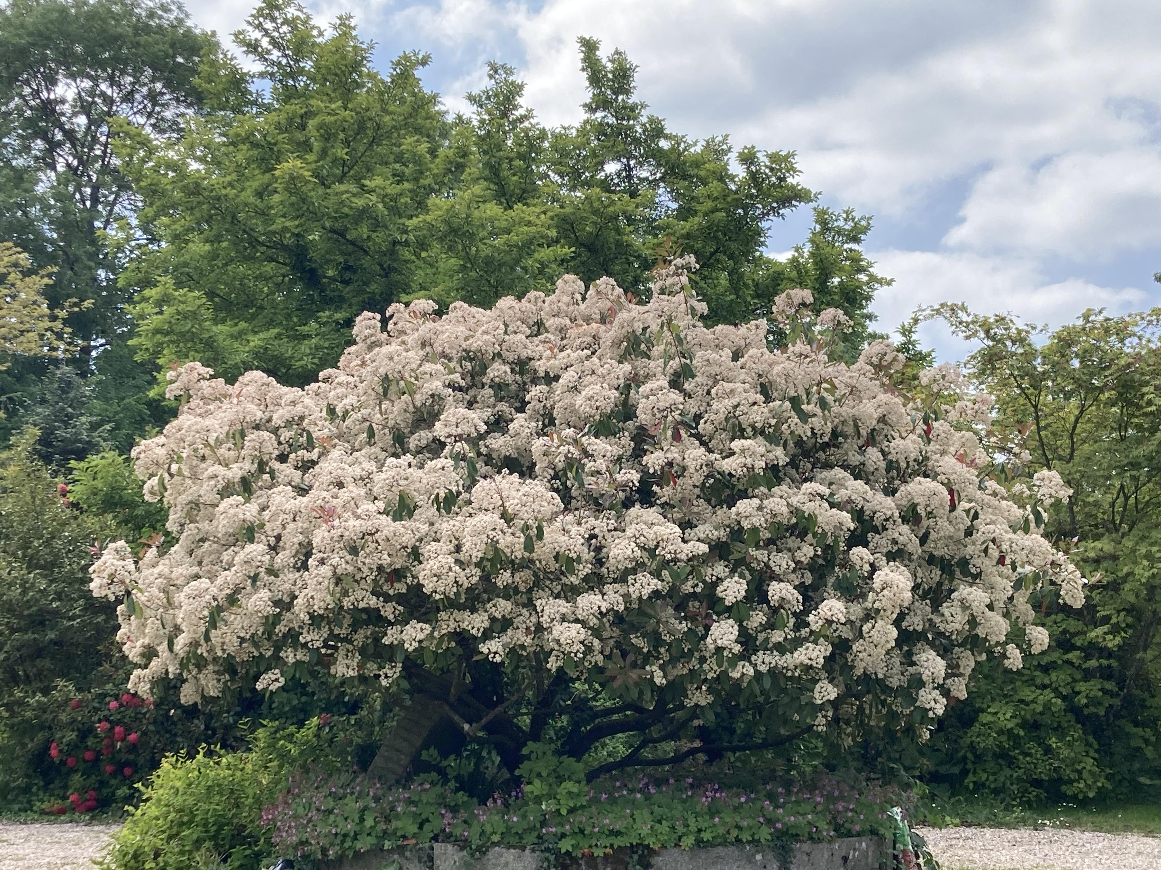 Les arbres du jardin site de leclosdechanchore for Arbres de jardin