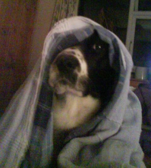 Look out E.T. - Boris Phone Home !