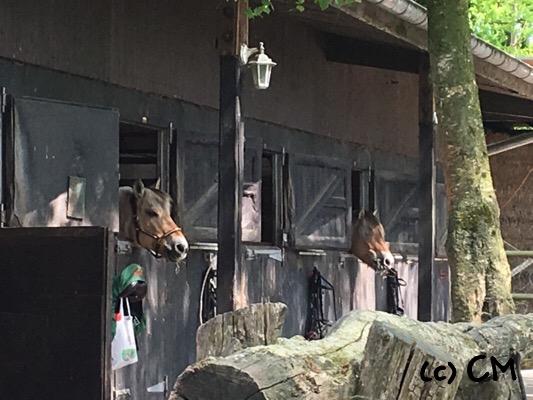 Ponyriege in der Mittagspause beim rausschauen