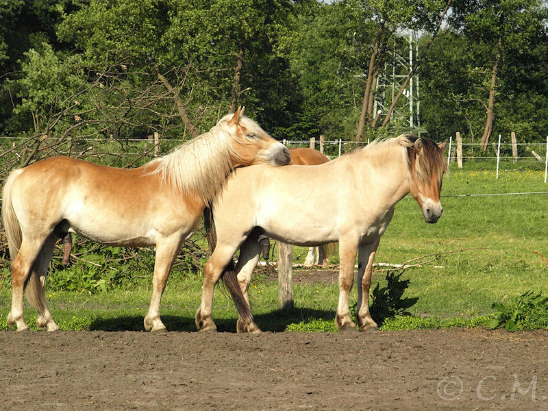 Azuro und Ragnar