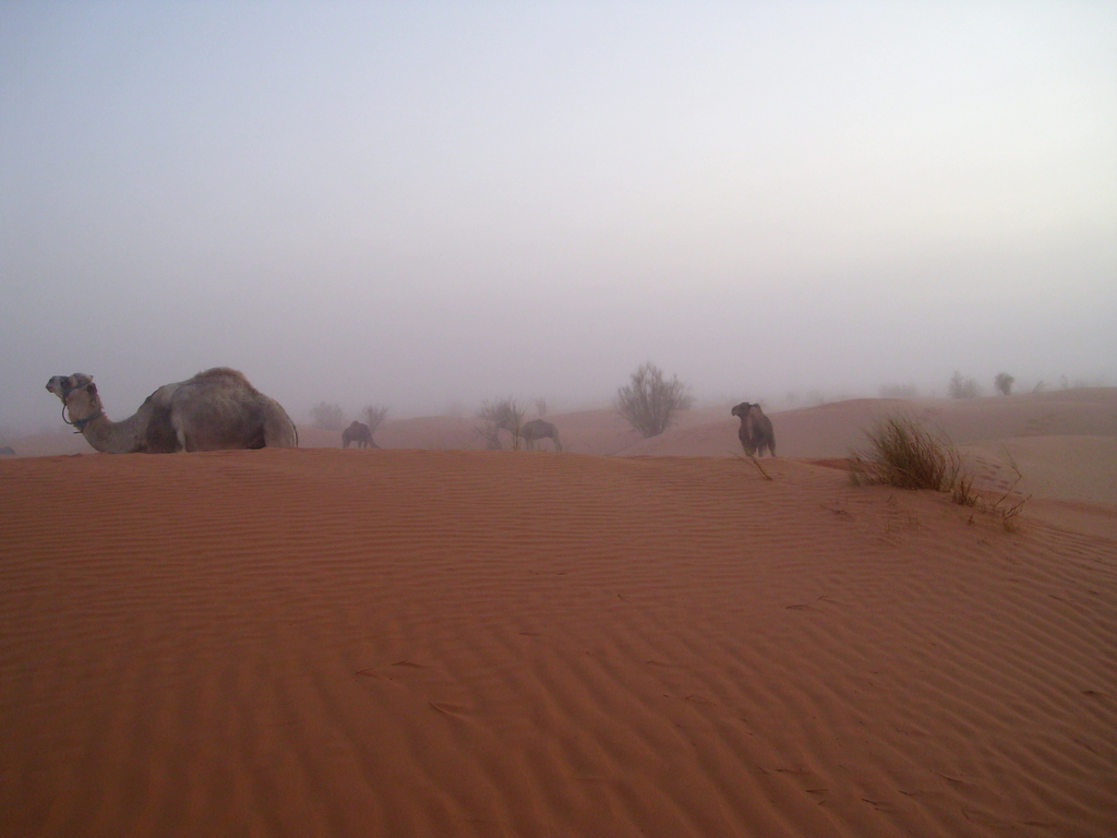 Nebel in der Sahara
