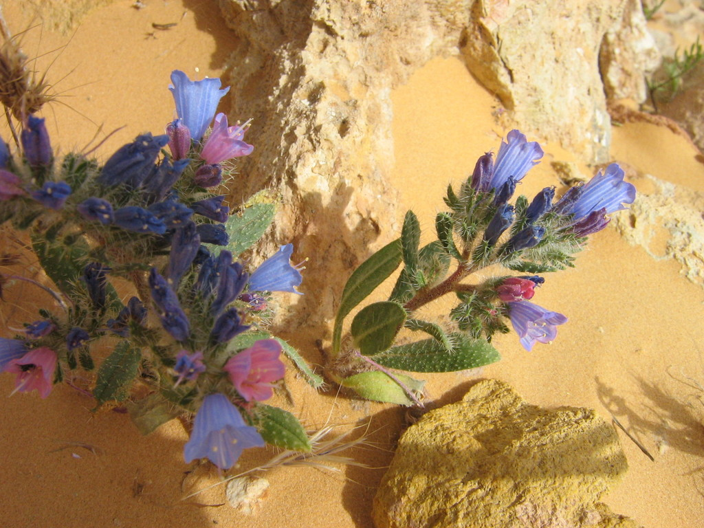 Blumen am Berg