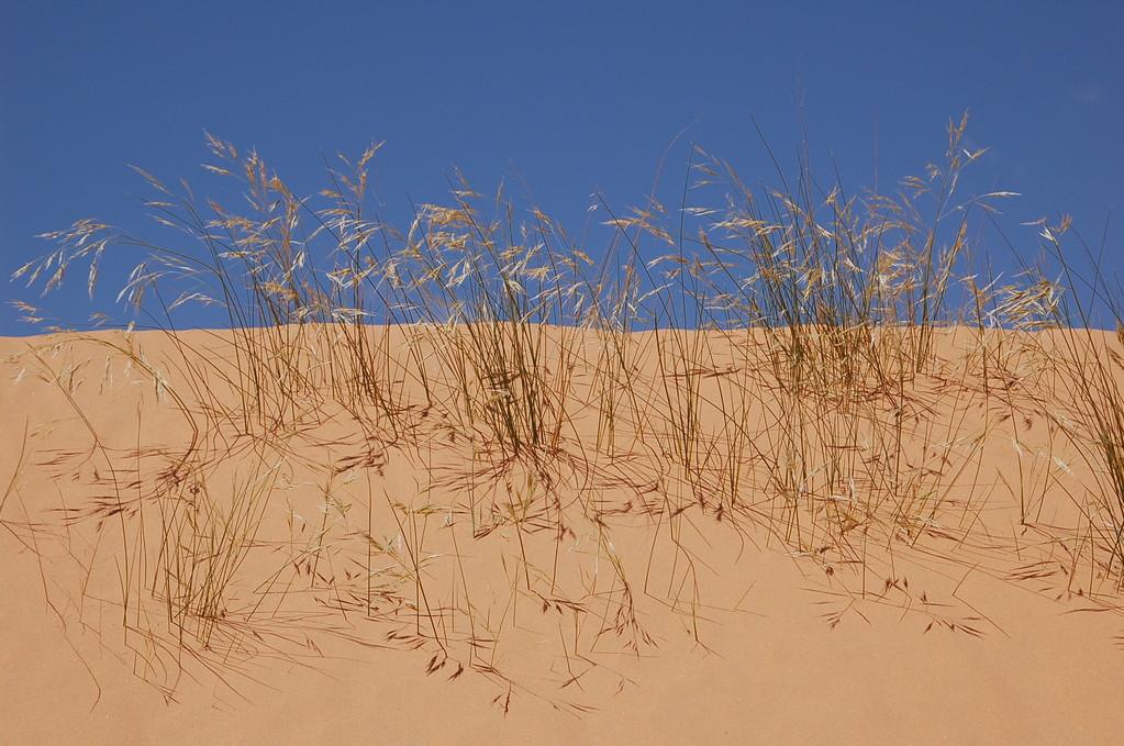 Gräser in der Mittagssonne