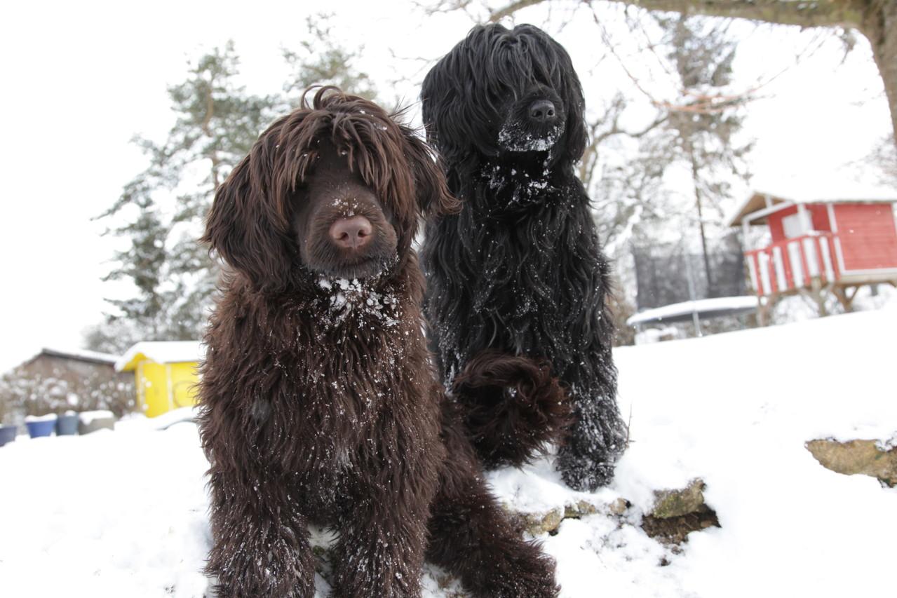 Jacky und Luana (Frau Gelb)