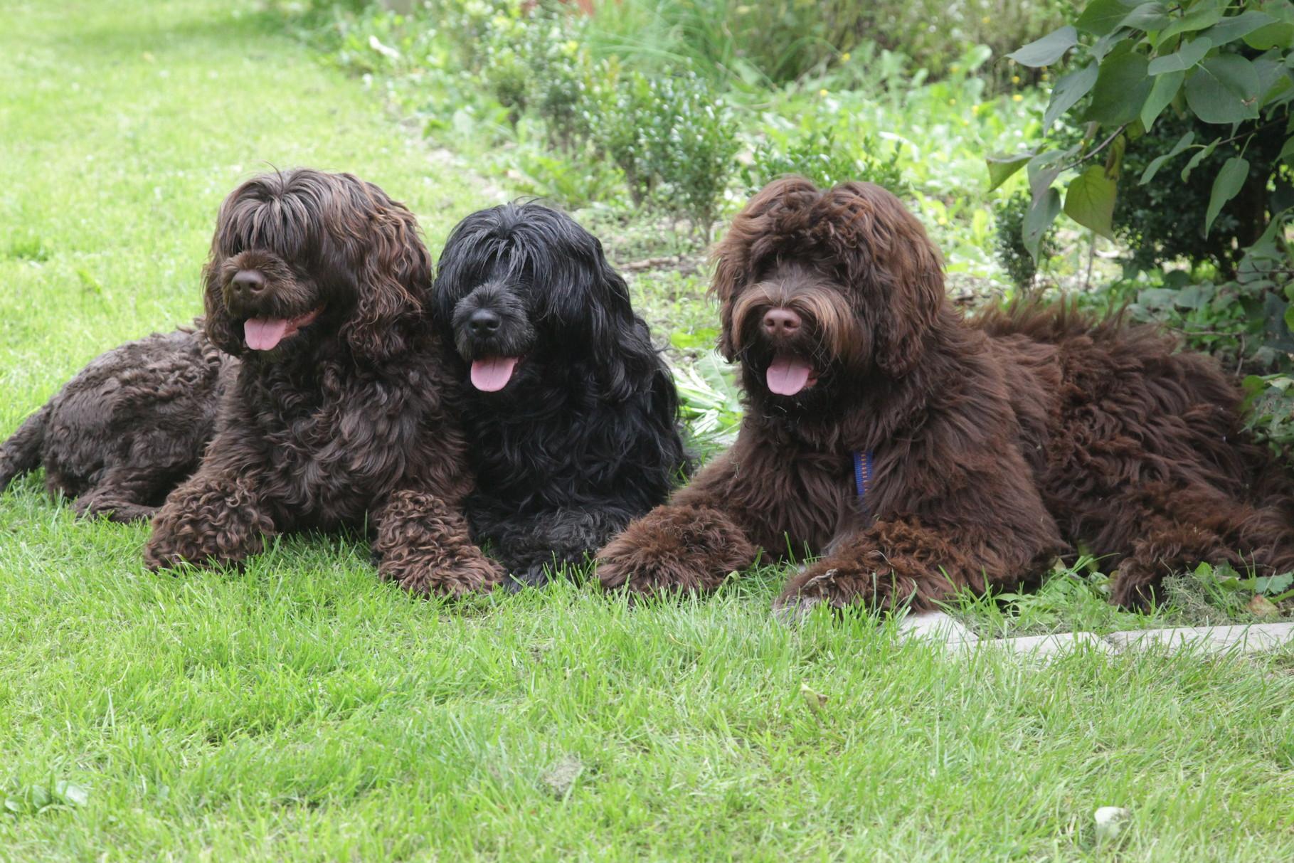 Luana, Jacky und Charlie (Herr Grün)