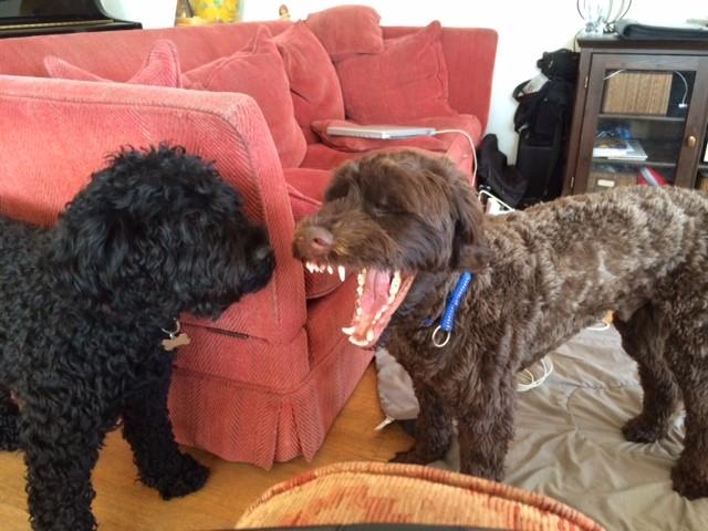 Boris (Her Orange) und Buster (Herr Blau)