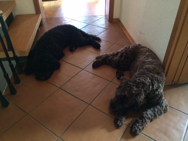 Boris (Herr Orange) und Buster (Herr Blau)