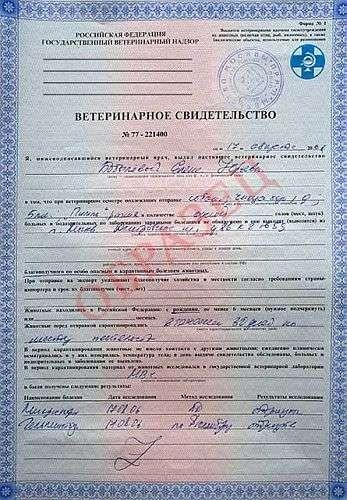Ветеринарный сертификат ес образец