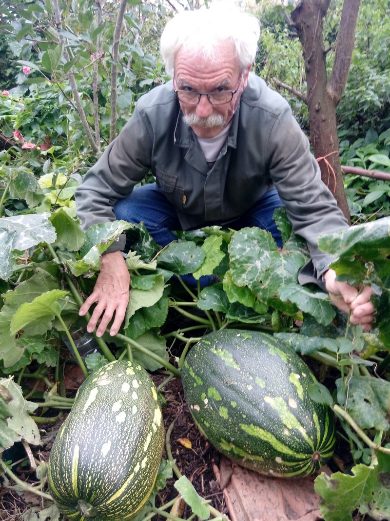 Cucurbitacée (appelée giromon ou douceur des Antilles) cultivée par Nicole et Jean-Marie Jéhan