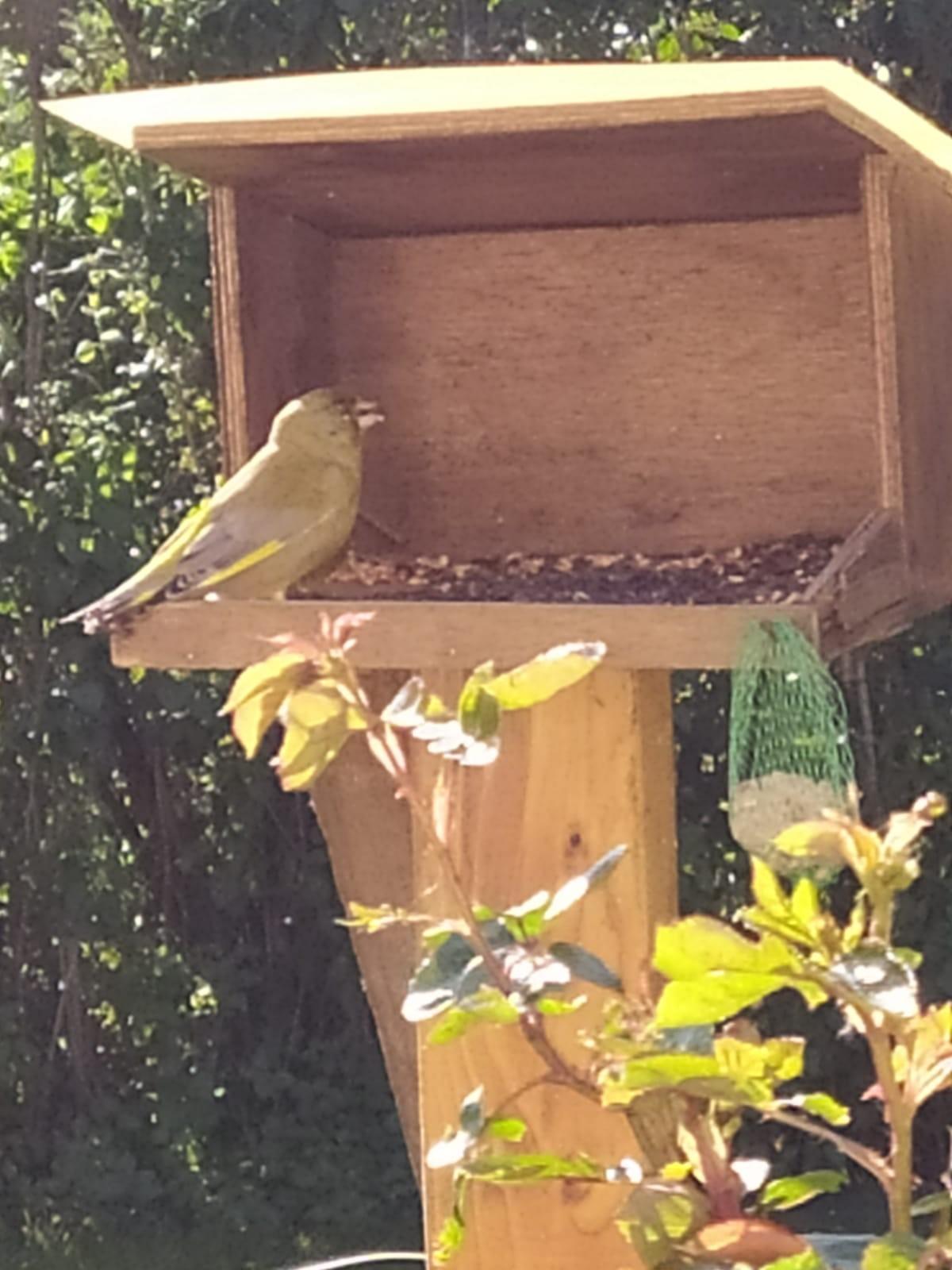 Sandrine et Bertrand Digne observent un verdier. Malheureusement cet oiseau est atteint d'une maladie.