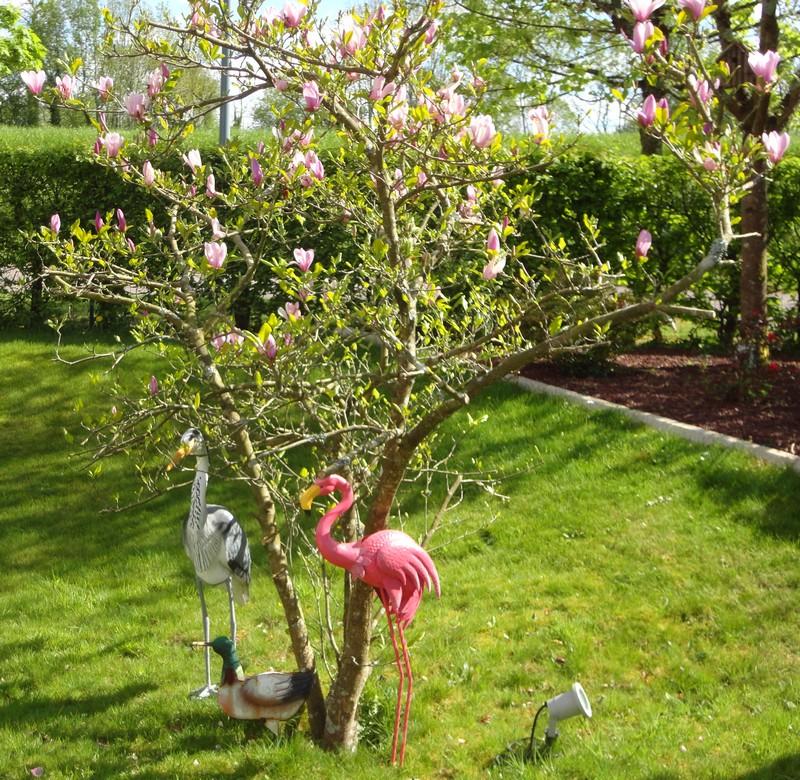 Sandrine et Bertrand : Magnolia