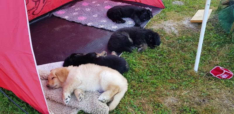 schlafen im Hundezelt nach erledigter Morgentoilette