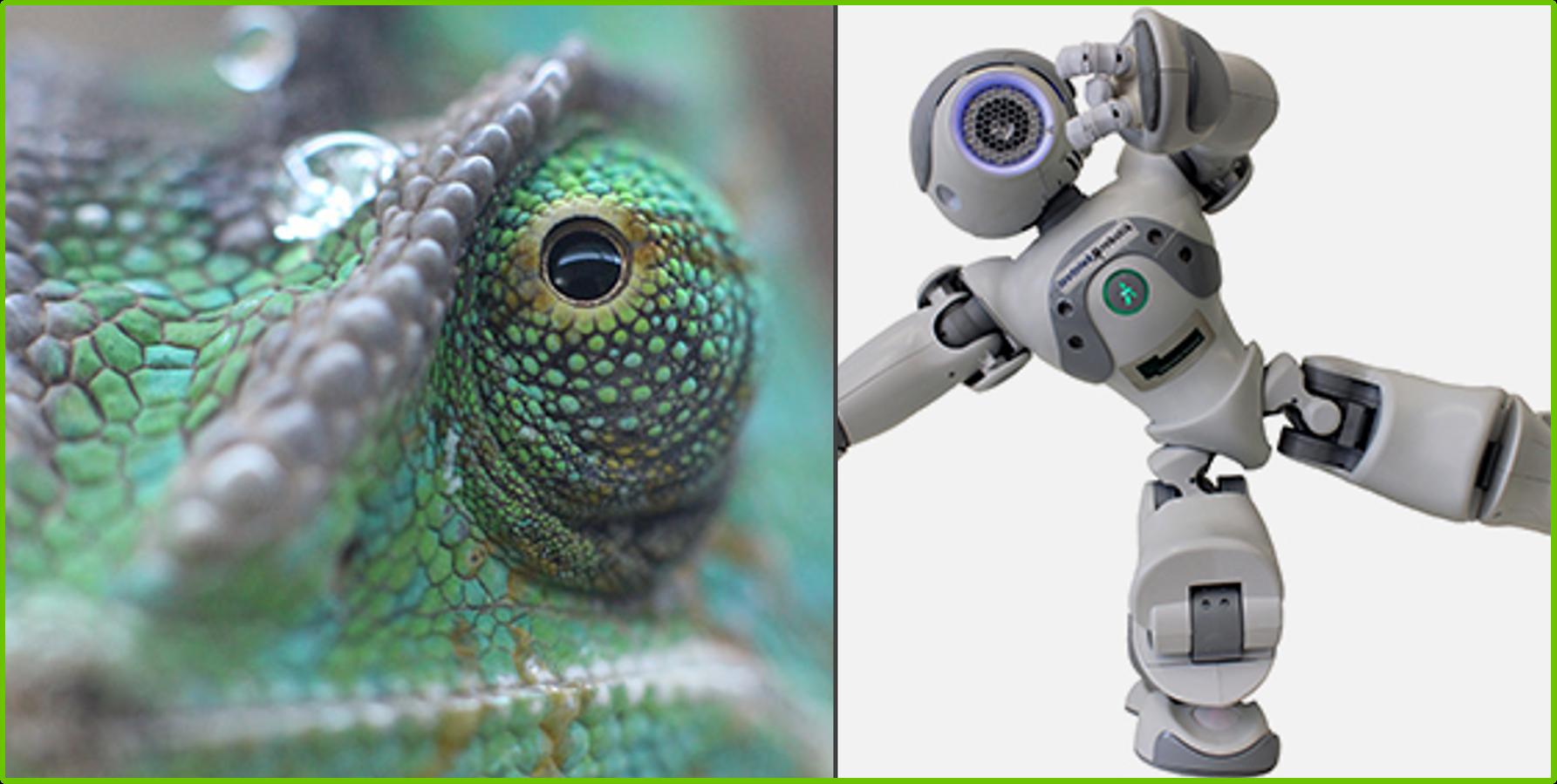 Biologie und Robotik in den Osterferien