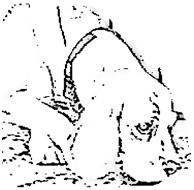 Pettrailer, Tiersuche, Rottal-Inn Hundsschui Feuerer
