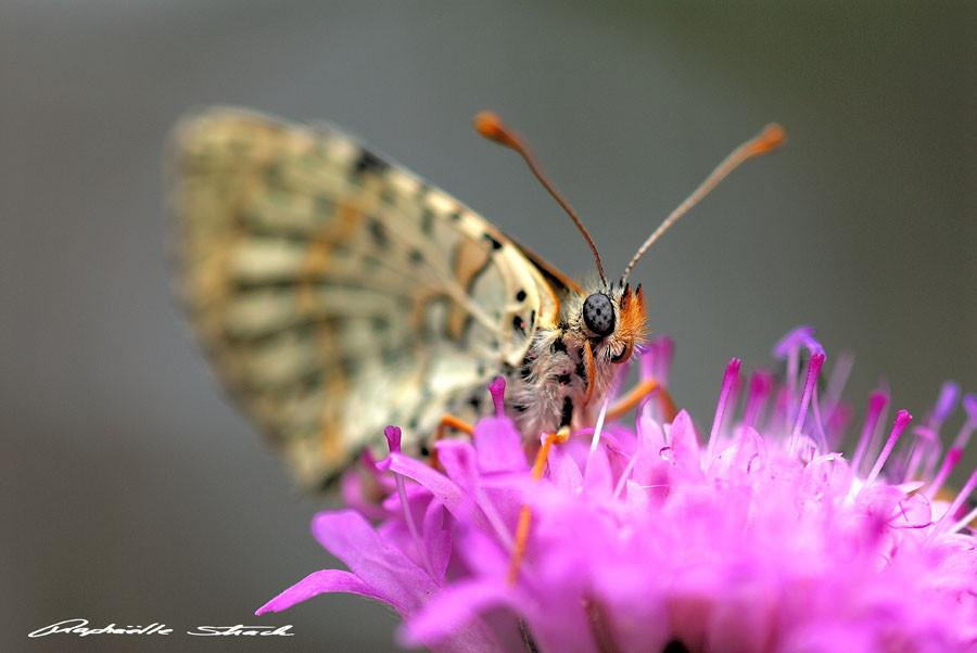© Raphaelle Strach - Photographe naturaliste en Lorraine