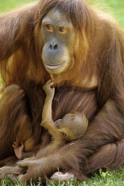 © Roger Puillandre - Photographe animalier en Bretagne
