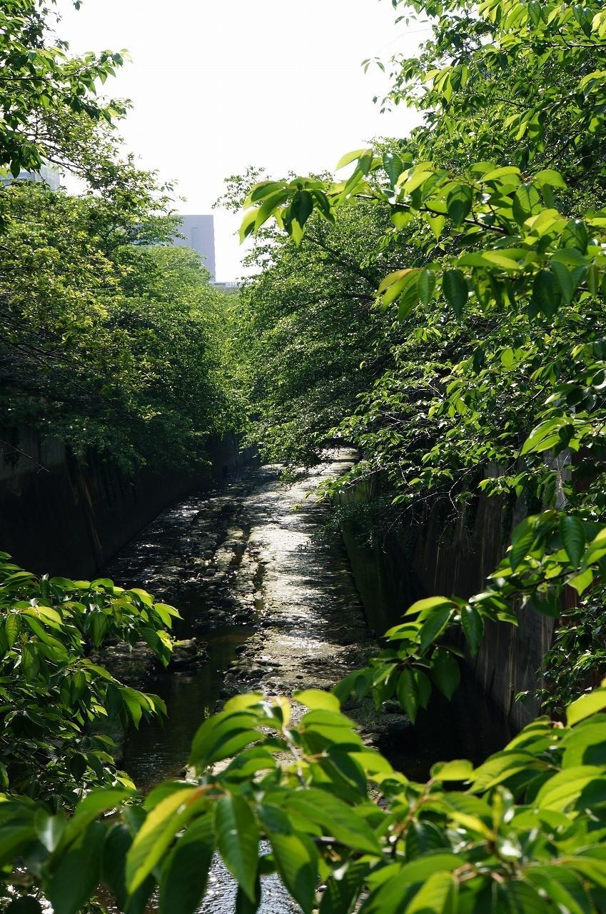 新緑がまばゆい神田川