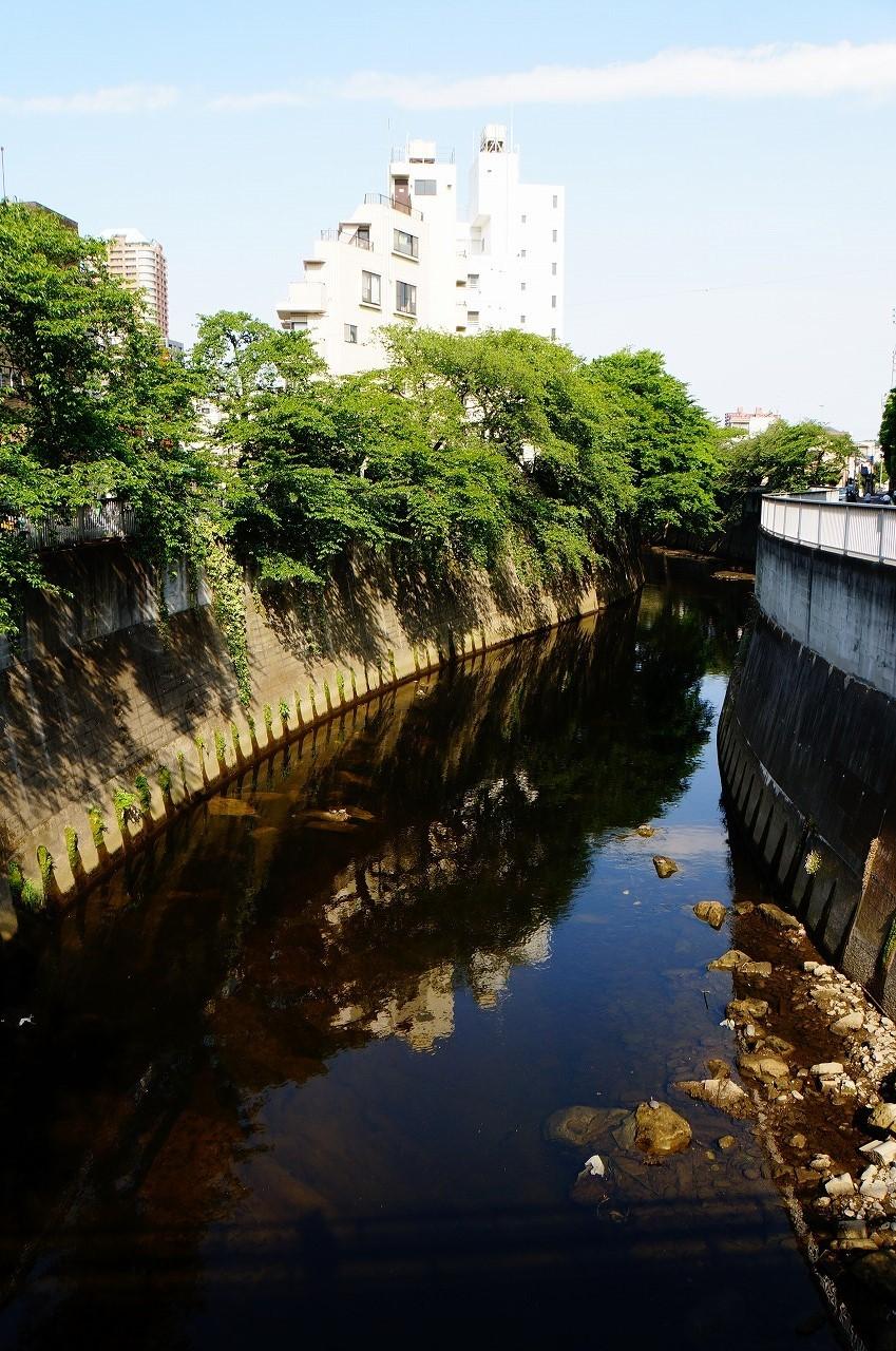 緑とビルが写り込んだ神田川(駒塚橋付近だよ)